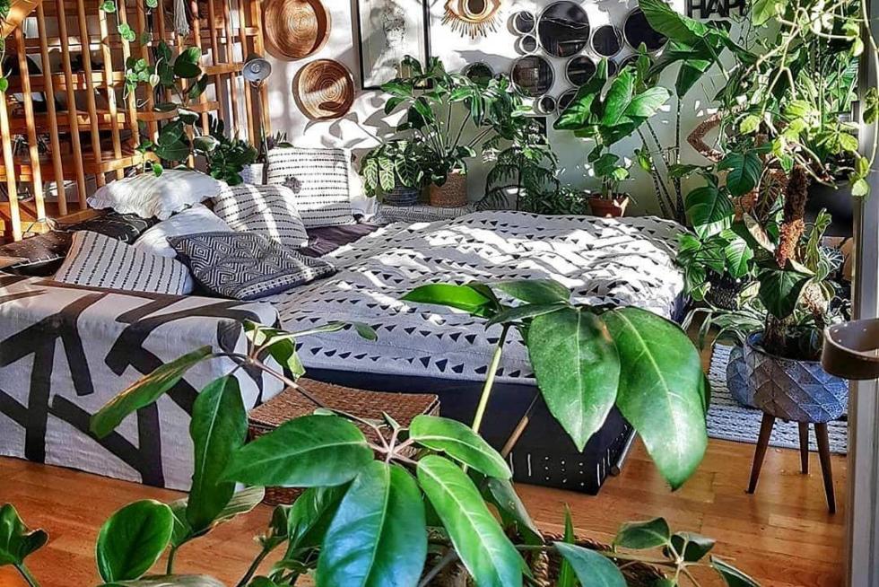 URBAN JUNGLE: Lista de plantas para montar floresta em casa