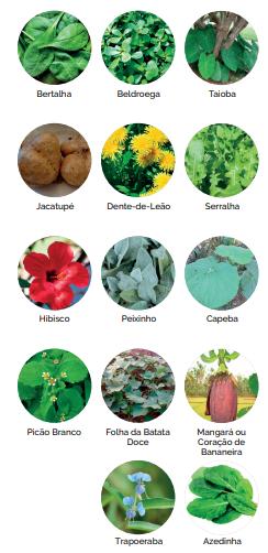 plantas comestíveis não convencionais